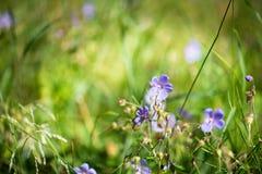Λουλούδια για το σχέδιό σας Στοκ φωτογραφία με δικαίωμα ελεύθερης χρήσης