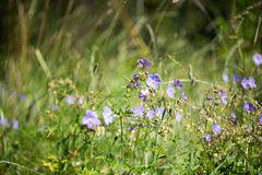 Λουλούδια για το σχέδιό σας Στοκ εικόνα με δικαίωμα ελεύθερης χρήσης