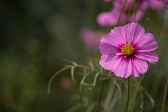 Λουλούδια για το υπόβαθρο Στοκ Φωτογραφία