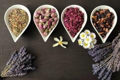 Λουλούδια για aromatherapy Στοκ Εικόνα