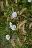 Λουλούδια εγγράφου με τους μίσχους του σιταριού Στοκ εικόνα με δικαίωμα ελεύθερης χρήσης