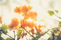 Λουλούδια εγγράφου στο θολωμένο υπόβαθρο, εκλεκτής ποιότητας τόνος Στοκ φωτογραφία με δικαίωμα ελεύθερης χρήσης