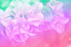 Λουλούδια εγγράφου φύσης υποβάθρων τόνου κρητιδογραφιών Στοκ Εικόνες