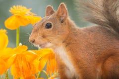 Λουλούδια επιθυμητά Στοκ φωτογραφία με δικαίωμα ελεύθερης χρήσης