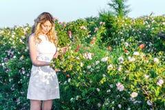 Λουλούδια επιλογής κοριτσιών σε έναν τομέα των τριαντάφυλλων Στοκ φωτογραφία με δικαίωμα ελεύθερης χρήσης