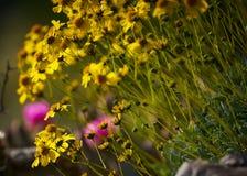 Λουλούδια ερήμων Στοκ εικόνα με δικαίωμα ελεύθερης χρήσης