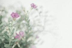Λουλούδια ζιζανίων στο εκλεκτής ποιότητας ύφος χρώματος στη σύσταση εγγράφου μουριών Στοκ φωτογραφία με δικαίωμα ελεύθερης χρήσης
