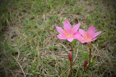 Λουλούδια ζωής Στοκ φωτογραφίες με δικαίωμα ελεύθερης χρήσης