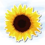 Λουλούδια, ηλίανθος Στοκ εικόνες με δικαίωμα ελεύθερης χρήσης