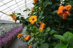 Λουλούδια θερμοκηπίων στοκ φωτογραφίες με δικαίωμα ελεύθερης χρήσης