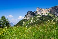 Λουλούδια λιβαδιών με τη σειρά και το μπλε ουρανό βουνών στο υπόβαθρο Αυστριακές Άλπεις, Τύρολο Στοκ φωτογραφία με δικαίωμα ελεύθερης χρήσης