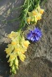 Λουλούδια λιβαδιών στην πέτρα Στοκ Εικόνες