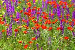 Λουλούδια λιβαδιών Υπόβαθρο ενός τομέα άνοιξη Στοκ φωτογραφίες με δικαίωμα ελεύθερης χρήσης