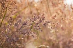 Λουλούδια λιβαδιών Στοκ Εικόνα