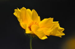 Λουλούδια λιβαδιών στοκ φωτογραφίες με δικαίωμα ελεύθερης χρήσης