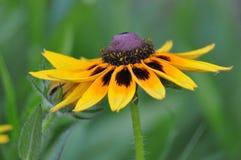 Λουλούδια λιβαδιών στοκ εικόνα με δικαίωμα ελεύθερης χρήσης