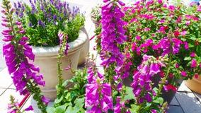 Λουλούδια κήπων στο πάρκο του Βιετνάμ, ιδέα του ντεκόρ Στοκ εικόνες με δικαίωμα ελεύθερης χρήσης