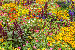 Λουλούδια κήπων Στοκ Φωτογραφία