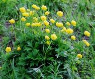 Λουλούδια κίτρινα Στοκ Φωτογραφίες