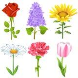 Λουλούδια καθορισμένα Στοκ Εικόνες