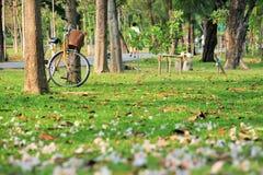 Λουλούδια και ένα ποδήλατο στο έδαφος σε ένα δημόσιο πάρκο Στοκ εικόνες με δικαίωμα ελεύθερης χρήσης