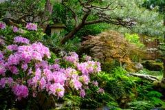 Λουλούδια και δέντρα σε έναν ιαπωνικό κήπο Στοκ Φωτογραφίες