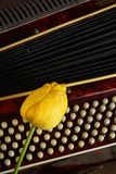 Λουλούδια και ακκορντέον τουλιπών σύνθεσης Στοκ Φωτογραφίες