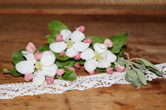 Λουλούδια και δαντέλλα της Apple Στοκ εικόνες με δικαίωμα ελεύθερης χρήσης