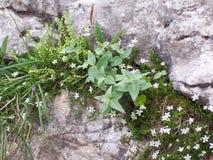Λουλούδια και βράχοι Στοκ εικόνα με δικαίωμα ελεύθερης χρήσης