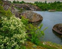 Λουλούδια και βράχοι Στοκ Εικόνες