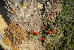 Λουλούδια και εγκαταστάσεις, SAN Pedro del Pinatar, Βαλένθια Υ Murcia, Στοκ Φωτογραφίες