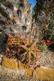 Λουλούδια και εγκαταστάσεις, SAN Pedro del Pinatar, Βαλένθια Υ Murcia, Στοκ Εικόνες