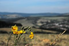 Λουλούδια και επαρχία στοκ φωτογραφία