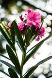 Λουλούδια και ηλιοφάνεια Στοκ Εικόνες