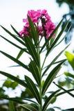 Λουλούδια και ηλιοφάνεια Στοκ εικόνες με δικαίωμα ελεύθερης χρήσης