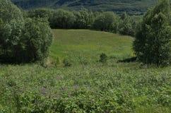 Λουλούδια και κοιλάδα Στοκ Εικόνα