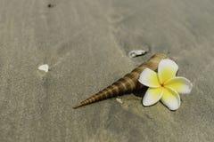 Λουλούδια και κοχύλι στην παραλία Στοκ εικόνες με δικαίωμα ελεύθερης χρήσης
