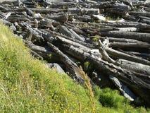 Λουλούδια και ξύλο κλίσης Στοκ εικόνα με δικαίωμα ελεύθερης χρήσης