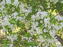 Λουλούδια και οφθαλμοί Στοκ εικόνα με δικαίωμα ελεύθερης χρήσης