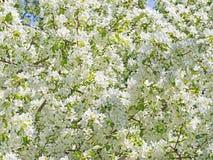 Λουλούδια και οφθαλμοί Στοκ φωτογραφίες με δικαίωμα ελεύθερης χρήσης
