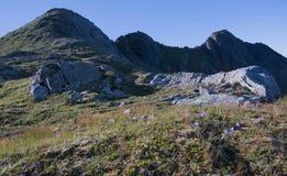 Λουλούδια και πέτρες Στοκ Εικόνα