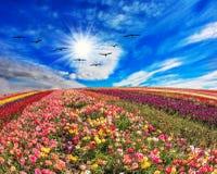 Λουλούδια και πουλιά Στοκ Φωτογραφία