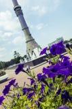 Λουλούδια και πύργος Ostankino Στοκ Εικόνες
