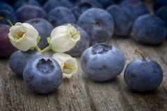 Λουλούδια και φρούτα βακκινίων (Vaccinium corymbosum) στο ξύλινο TA Στοκ Εικόνες