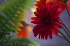 Λουλούδια και φτέρη Στοκ Εικόνα