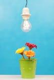 Λουλούδια και φως Στοκ φωτογραφία με δικαίωμα ελεύθερης χρήσης