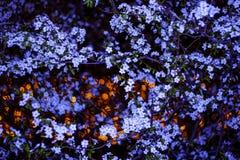 Λουλούδια και φω'τα Στοκ εικόνα με δικαίωμα ελεύθερης χρήσης