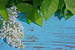 Λουλούδια και φύλλα στον παλαιό ξύλινο πίνακα Στοκ Φωτογραφίες