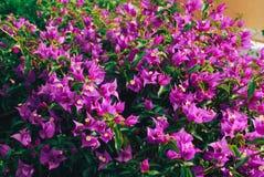 Λουλούδια και φύλλα, υπόβαθρο άνοιξη Στοκ Εικόνες