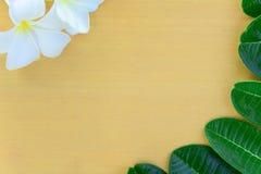 Λουλούδια και φύλλα Plumeria στο ξύλο Στοκ Εικόνες